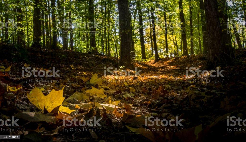 glühende gefallenen Blätter auf einem bewaldeten Pfad im Herbst – Foto