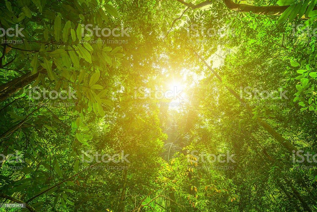 Glowing Green Rainforest stock photo