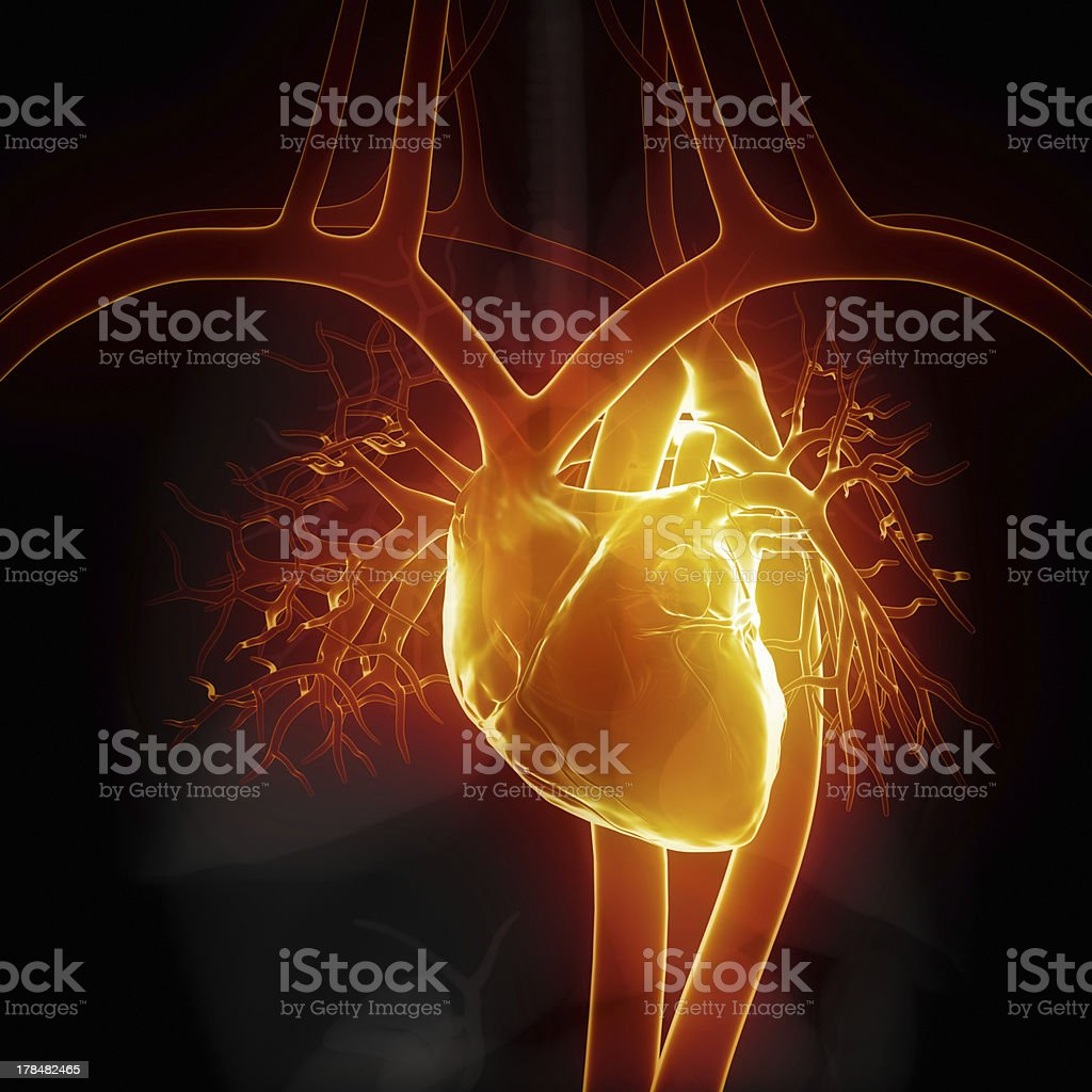 Glowing heart with internal organs stock photo