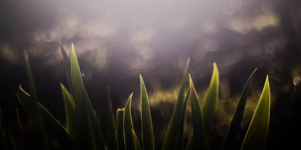 Glühende Iris mit Bubble Bokeh – Foto