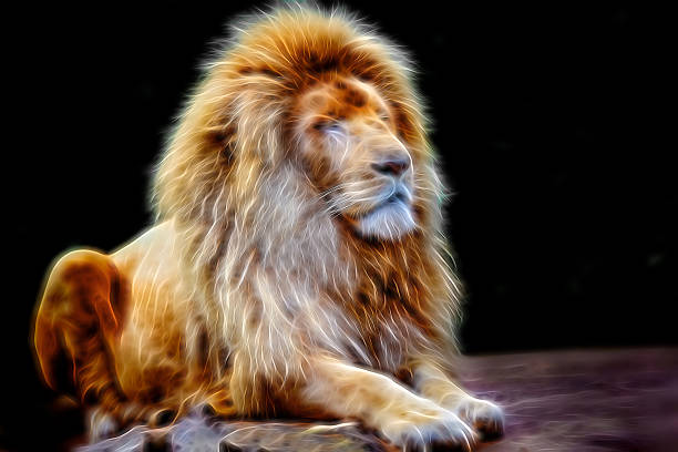 Royalty Free Angry Lion Wallpaper Pictures Images And Stock Photos