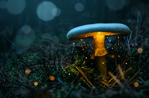 istock Glowing mushroom in the forest 1064247736