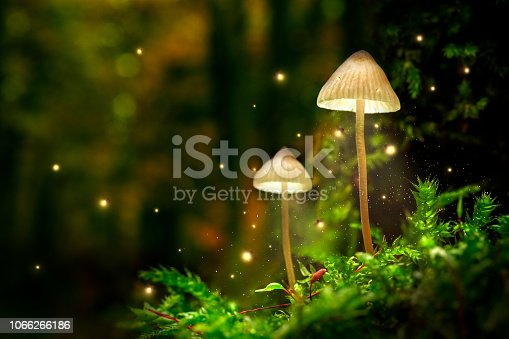 istock Glowing mushroom lamps with fireflies in magical forest 1066266186