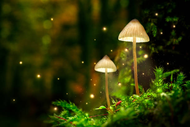 Glowing mushroom lamps with fireflies in magical forest Glowing mushroom lamps with fireflies in magical forest dreamlike stock pictures, royalty-free photos & images