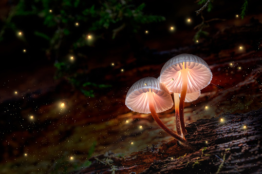 istock Glowing mushrooms on bark with fireflies in forest 1187024968
