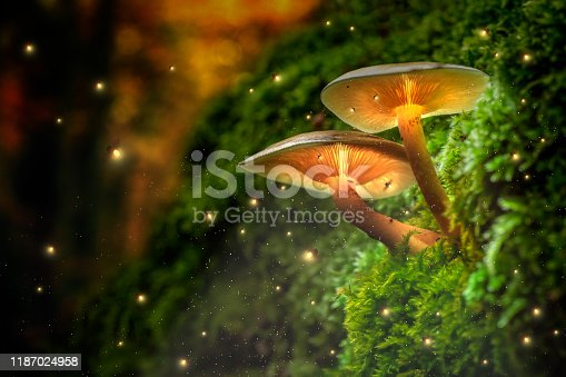 Glowing mushrooms on moss and fireflies in forest at dusk