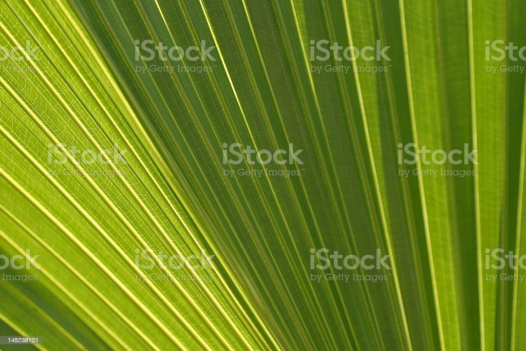 Glowing Palm royalty-free stock photo