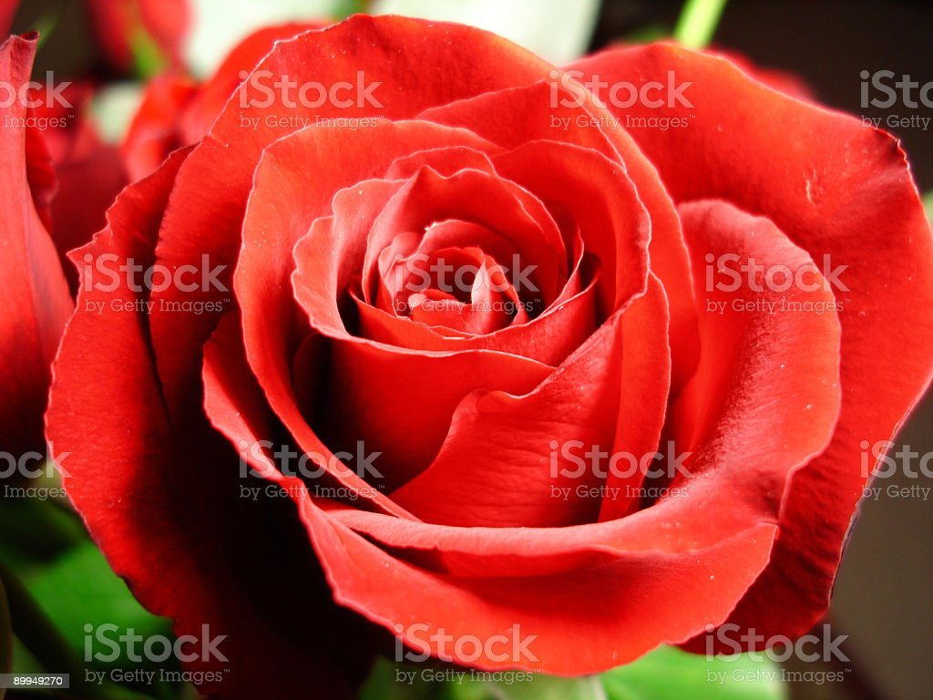 Glowing Red Rose royalty-free stock photo