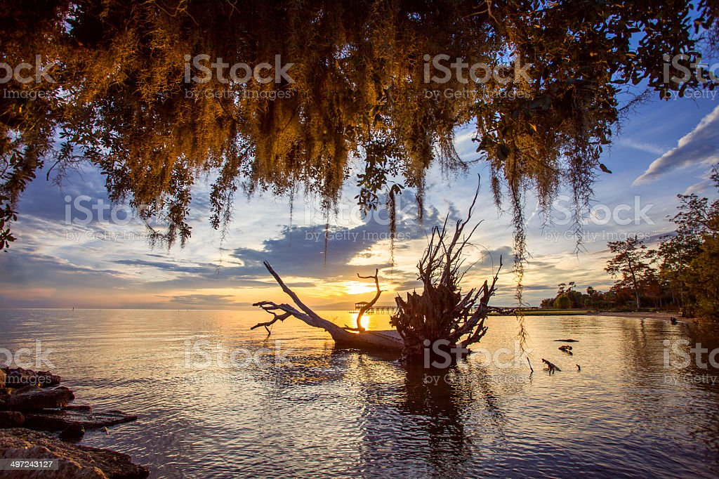 Glowing Spanish Moss stock photo