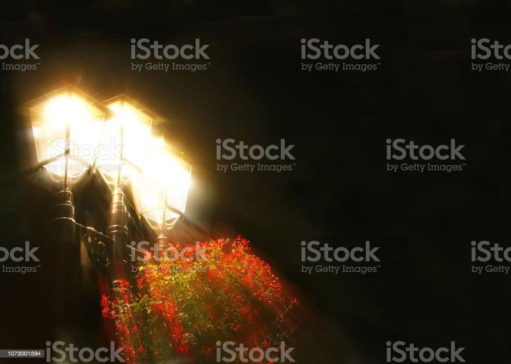 Encendida la lámpara de calle con flores rojas sobre fondo negro. Lugar de inscripción. Triple fuente de luz en la noche. Iluminación de la ciudad y las calles en la oscuridad. Plantas decorativas. Tarjeta de felicitación. - foto de stock
