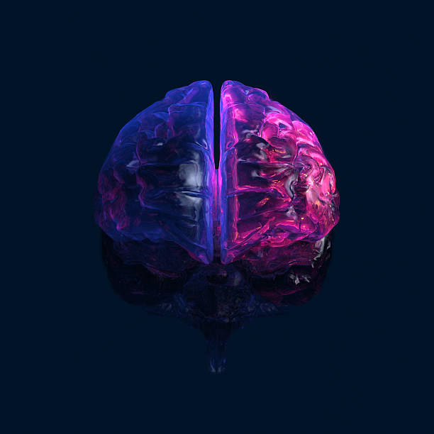 "Glowing transparent human Brain on dark background ""Full CG images made by my self, showing a human brain on white background. Illness and Stroke or activity as point of view."" auditory cortex stock pictures, royalty-free photos & images"