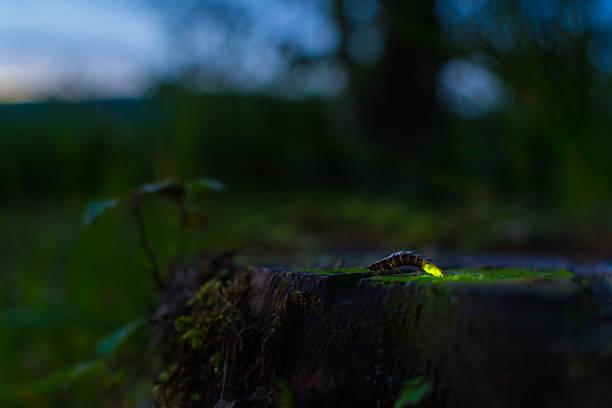 Glowworm stock photo