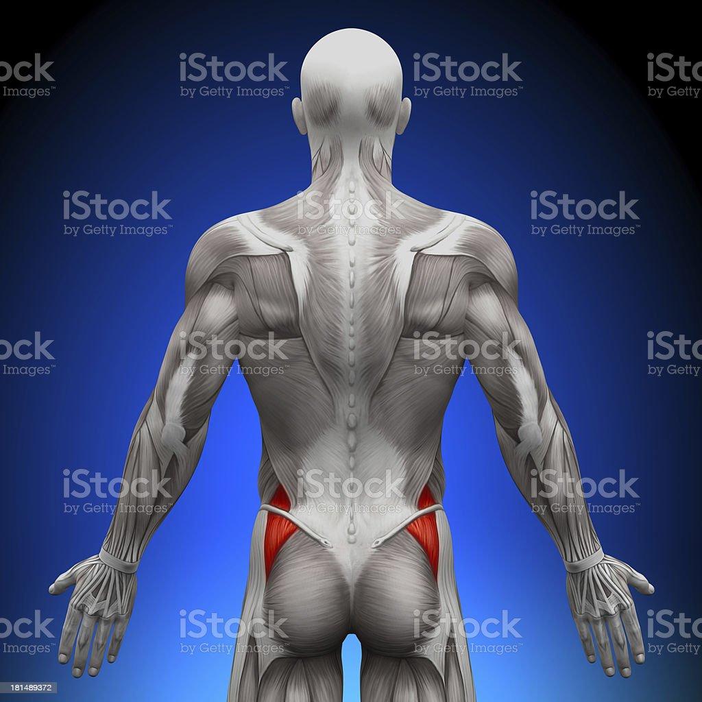 Fein Anatomie Tätowierung Risborough Bilder - Anatomie Von ...