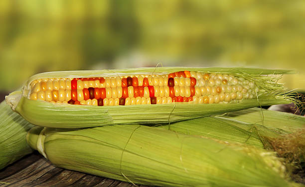 gmo food - genetic modification stock photos and pictures