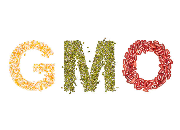 gmo - genetic modification stock photos and pictures