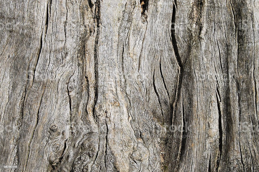 Gnarled old tree trunk royalty-free stock photo