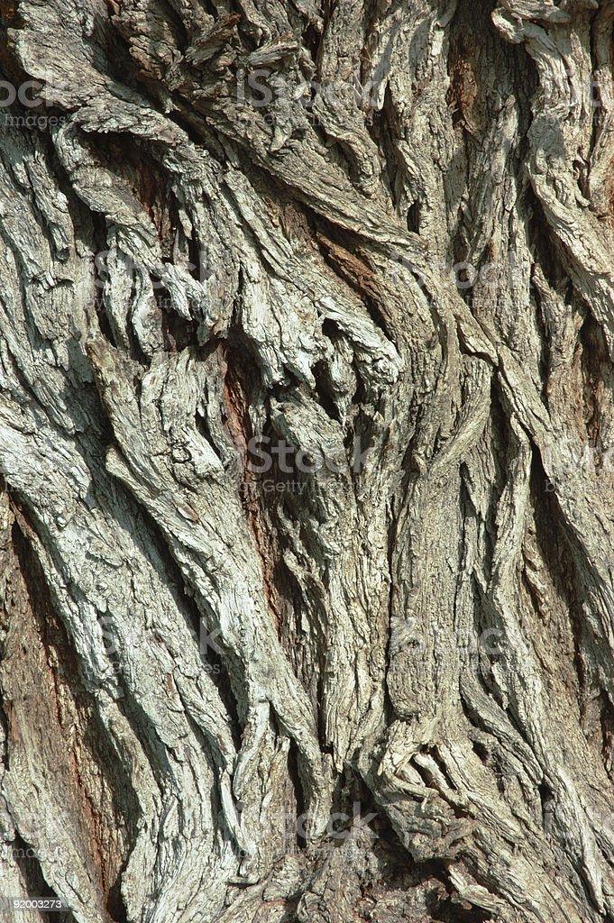 Gnarled Tree Bark royalty-free stock photo