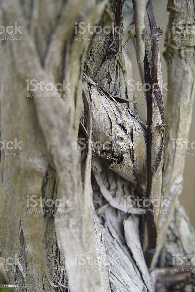 Gnarled Wood Lizenzfreies stock-foto