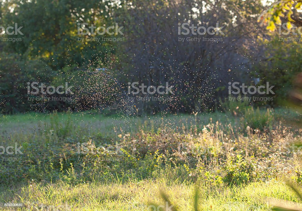 Gnats in the sunset light stock photo