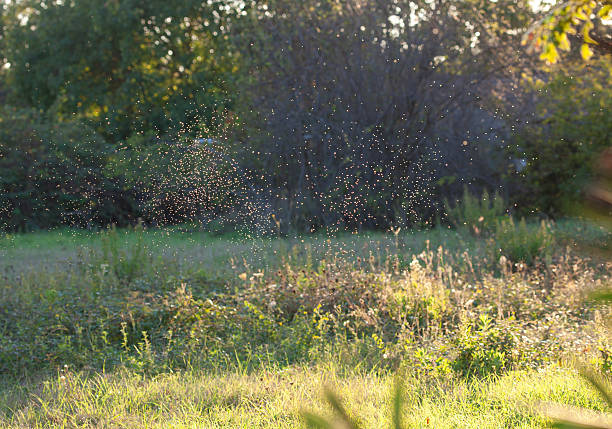gnats in the sunset light - insektenschwarm stock-fotos und bilder
