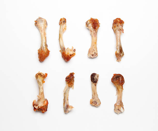 Royalty Free Chicken Bone Pictures Images And Stock Photos Istock