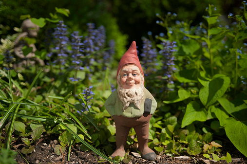 Garden gnome with hammer in the foliage