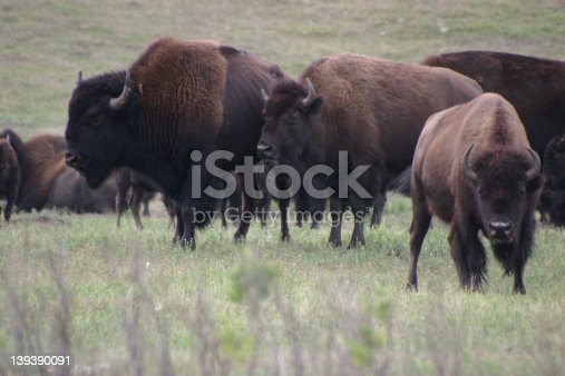 Bison, South Dakota