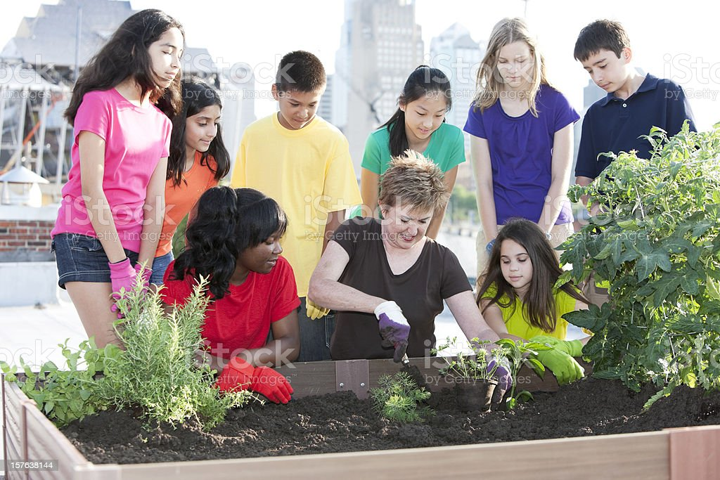 Go Green Urban Rooftop Garden Planted By Ethnically ...