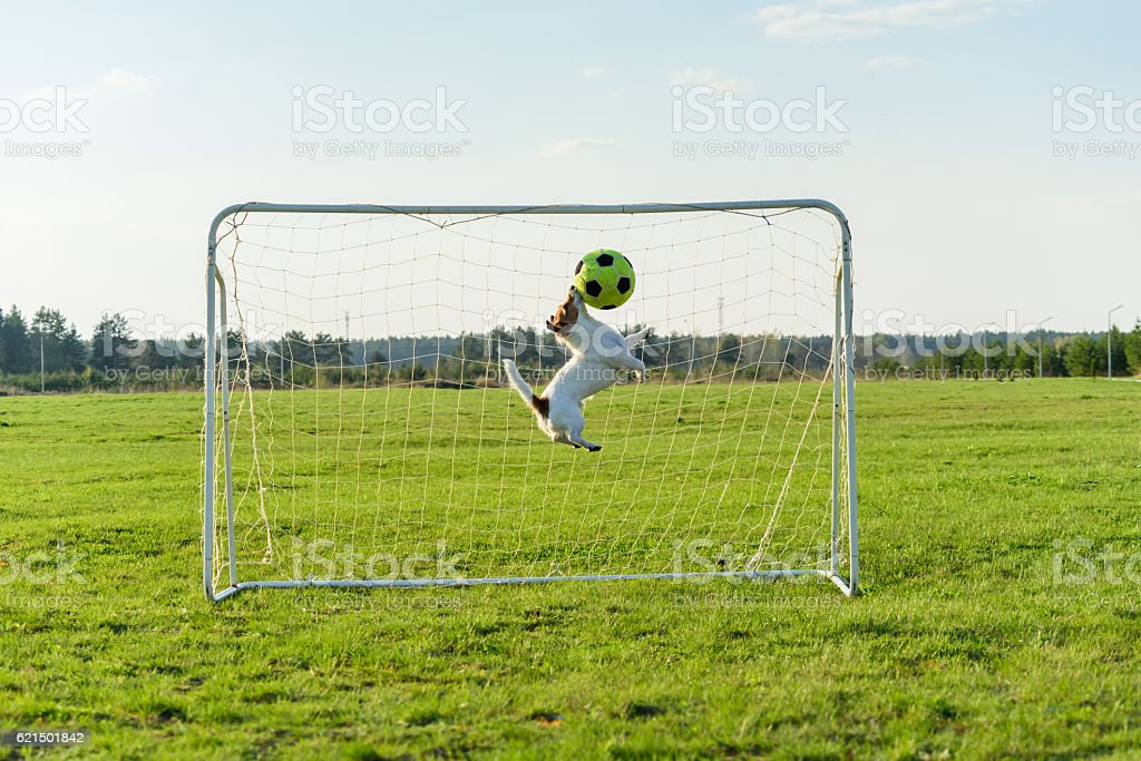 Goalie catching football ball saving goal foto stock royalty-free