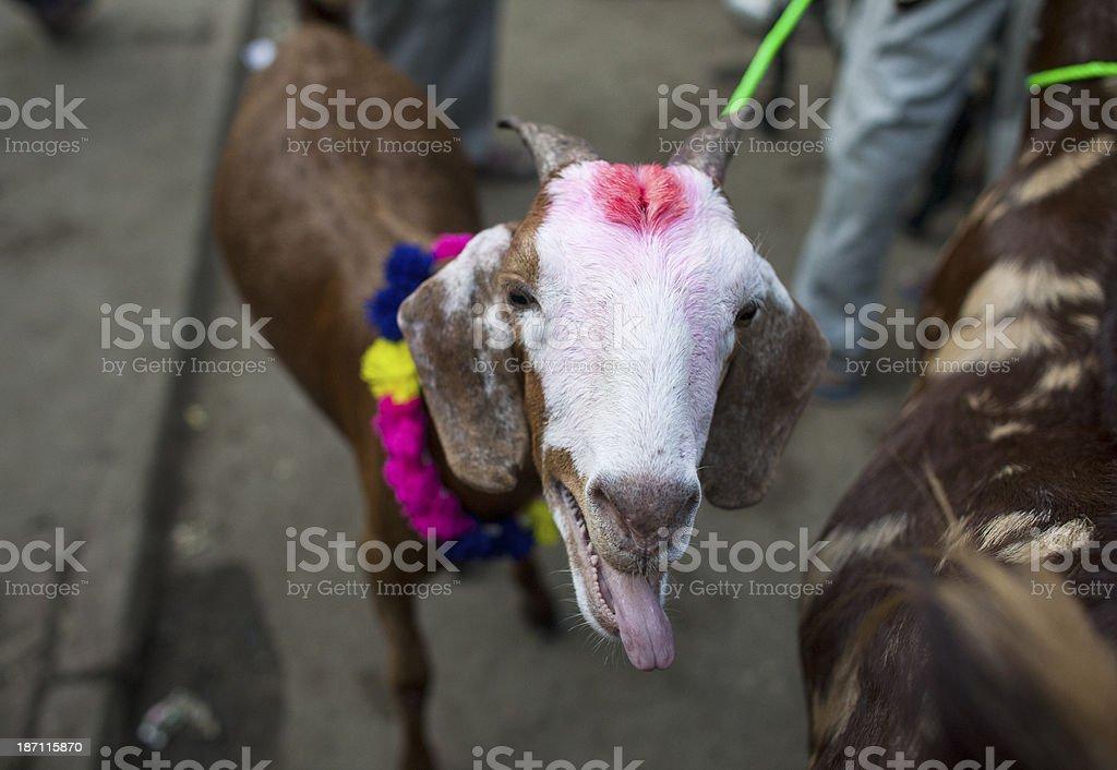Goat at market stock photo