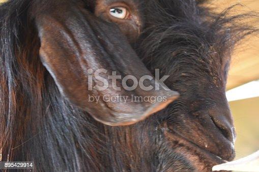 istock Goat close up 895429914