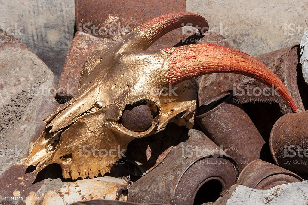 Goat cranium and gold color red stock photo