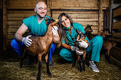 Veterinarians talk about healthy eating of goats