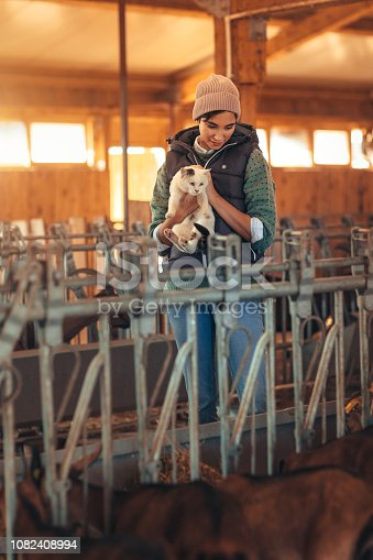 Volunteers feeding goats in the barn. Woman carrying cat.