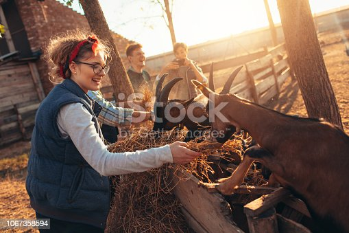 Young volunteers feeding goats on farm.