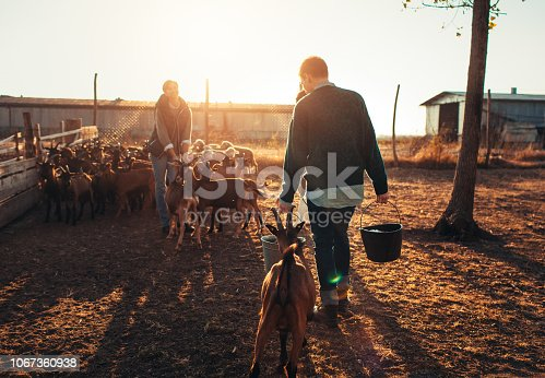 Group of young people feeding goats on farm.