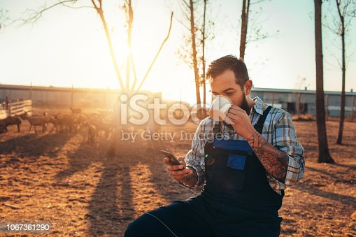 Goat farm owner sitting on the wooden fence, using smart phone and drinking refreshment.