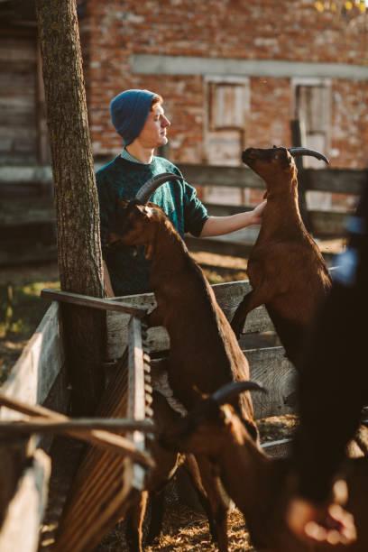 Goat Farm Volunteers stock photo