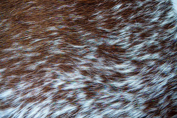 goat fur - animal markings stock photos and pictures