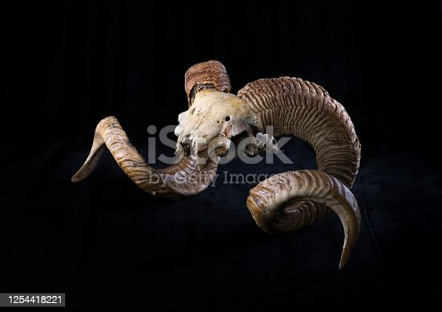 1151385192 istock photo goat horns and skull isolated on black background 1254418221