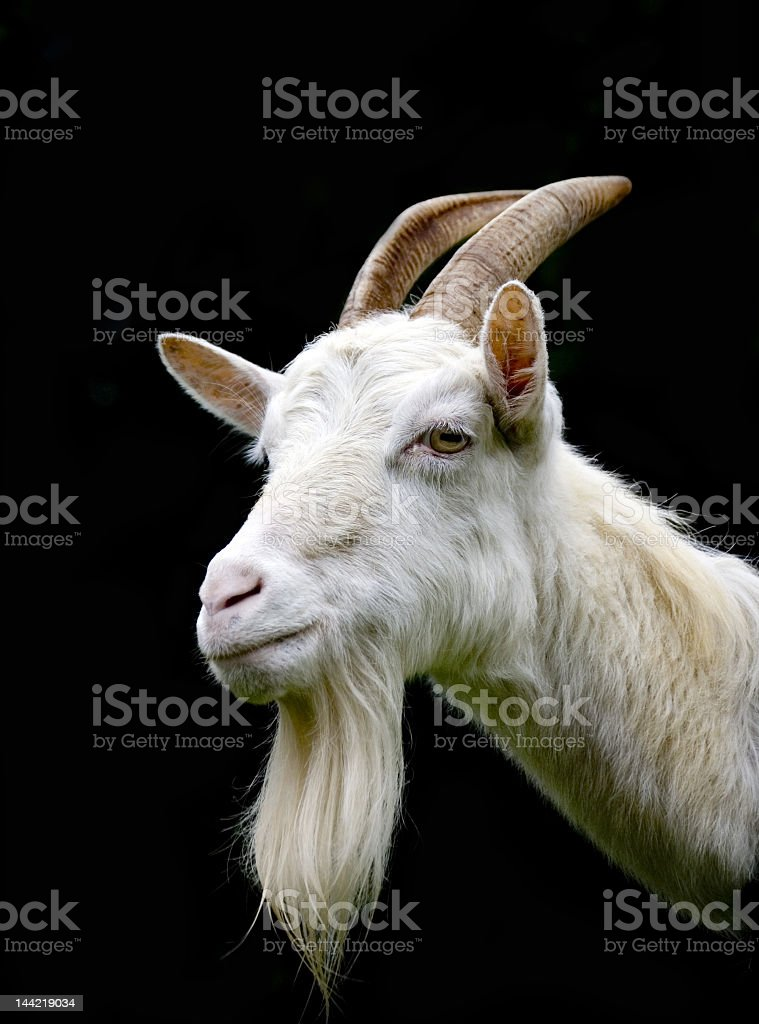 Animal Head Body Part Beauty In Nature Black Background Goat