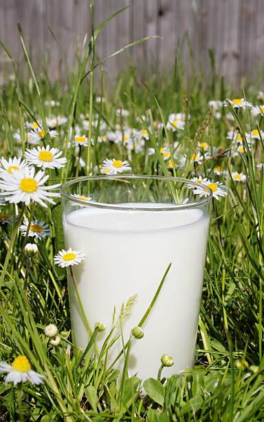 goat milk stock photo