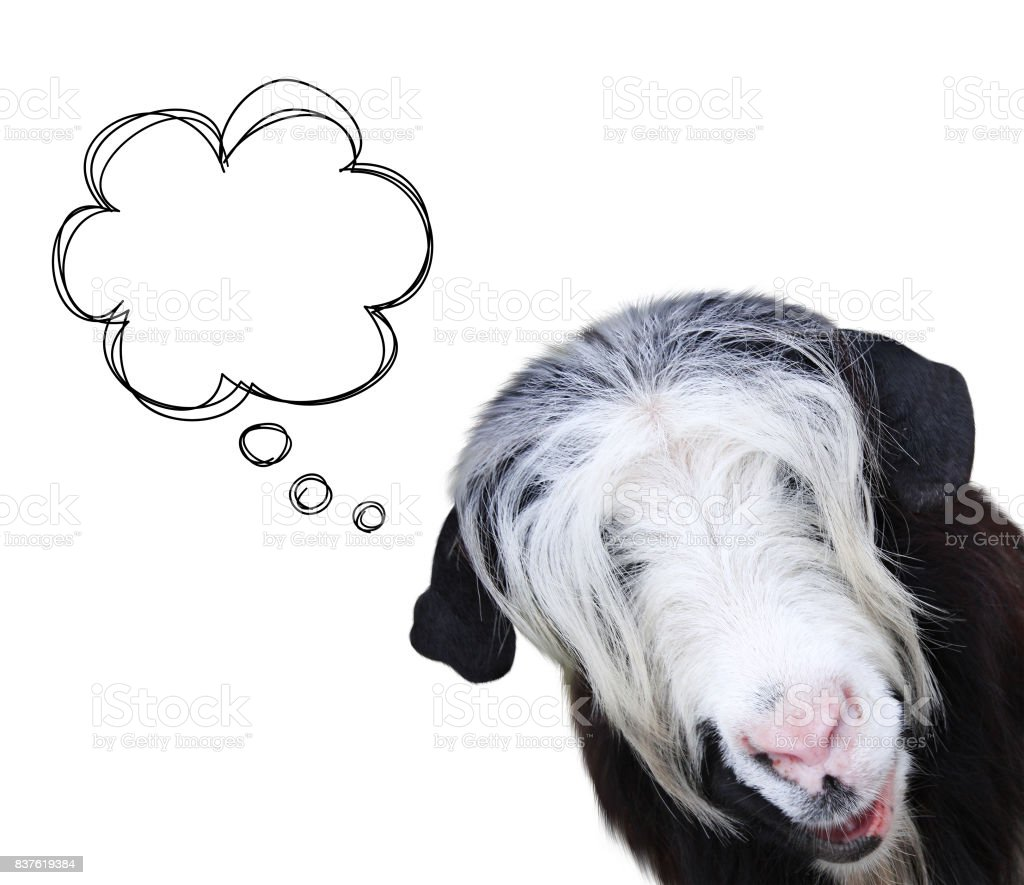Goat muzzle of black and white color stock photo