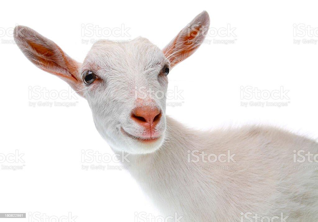 Goat – Foto