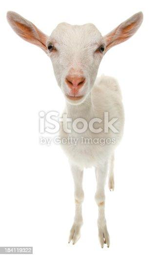 GoatSimilar Images: