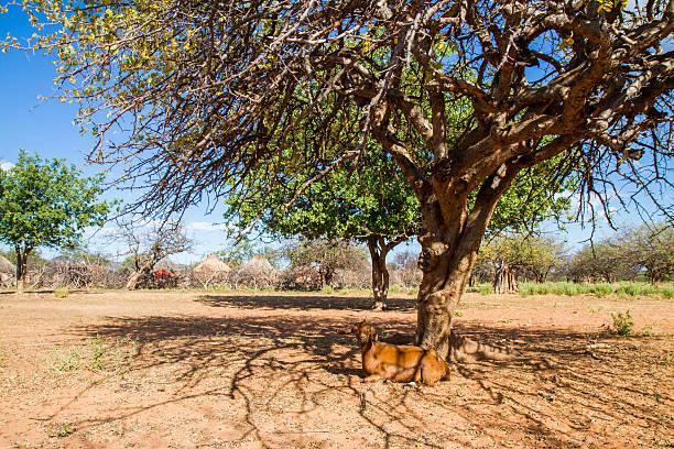kozy odpoczynku - półpustynny zdjęcia i obrazy z banku zdjęć