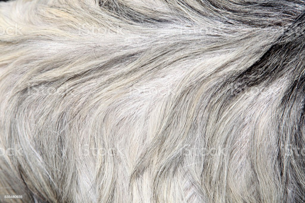Goat skin stock photo