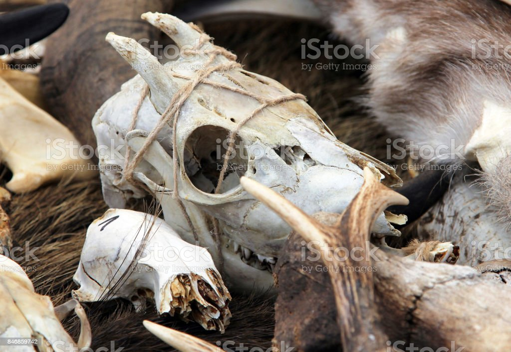 Goat skull at fair of artisans stock photo