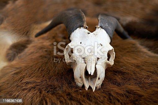 1151385192 istock photo goat skull on bear fur. close up 1166367435