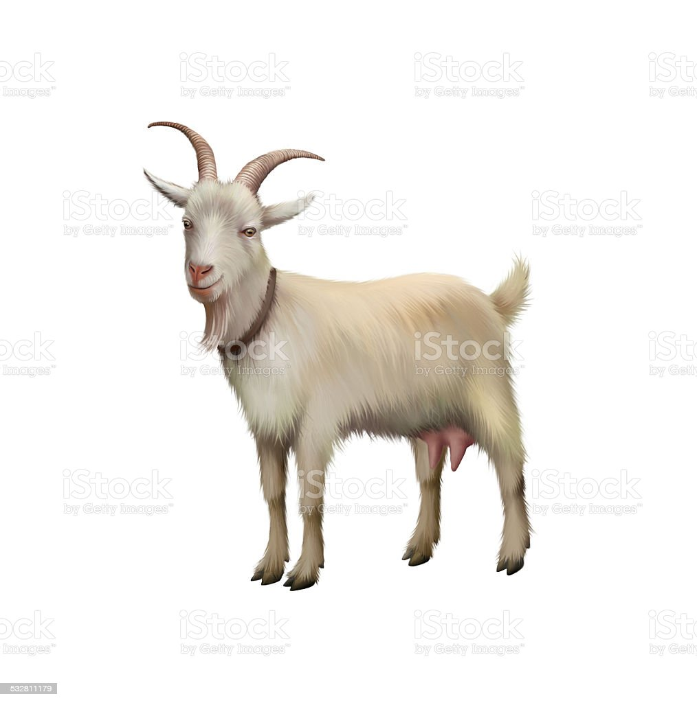 Goat standing up stock photo